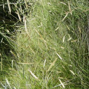 Native Grass Mixes
